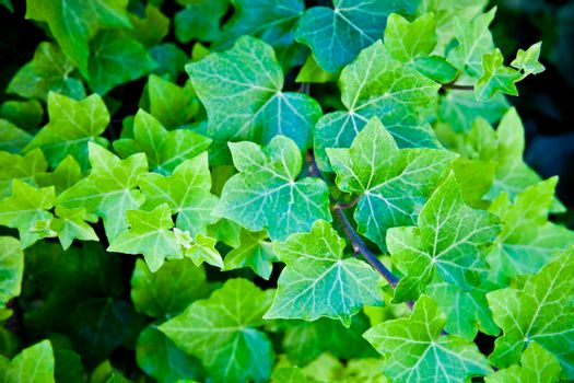 Green summer leaves pattern background.