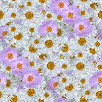 multi-color floral print collage, seamless floral pattern. delicate flowers of daisies. decorative elements for design and creativity