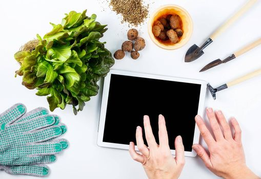 Female hands over tablet screen, home gardening online learning concept. Nearby on the table is a transplant plant and small gardening tools, a flower pot, gloves, expanded clay.