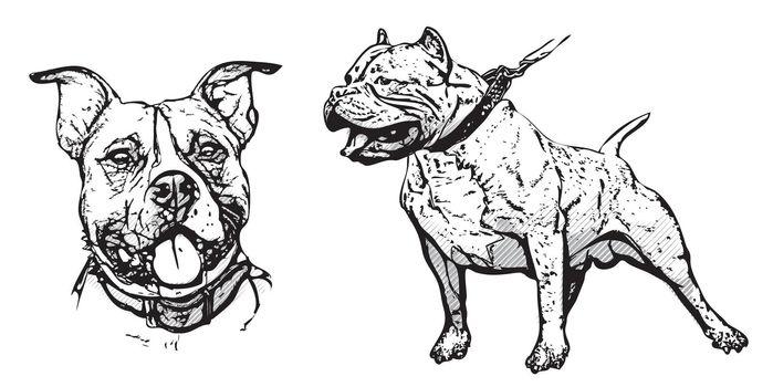 american pitbull terrier illustration