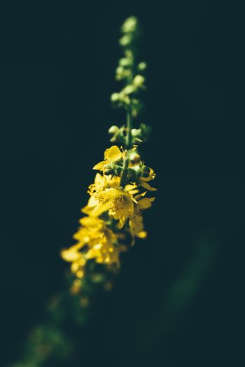 Stalk with yellow tiny flowers
