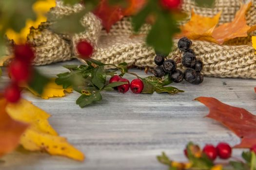 Autumn background. Decor of hawthorn berries, mountain ash berries and leaves on a painted wooden surface.