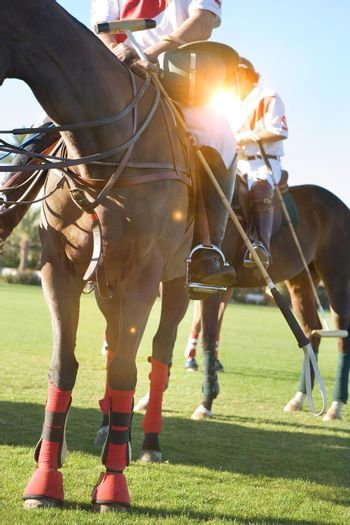 Portrait shot of Polo Players