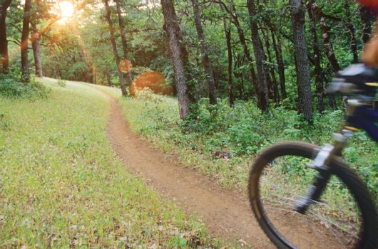 Blurred motion of biker riding on forest trail