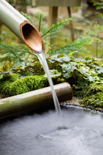Water flowing from bamboo pipe