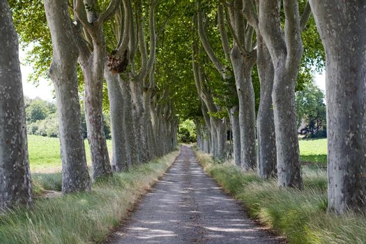 Treelined path on country road