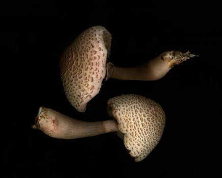 Two mushrooms on black background
