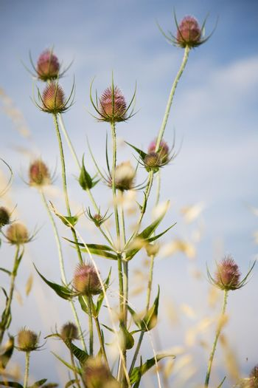 Plants in field