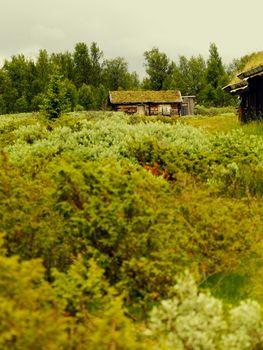 Farmland green scene