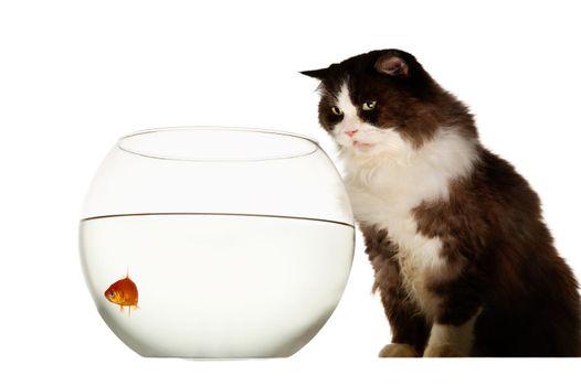 Mischeavous cat looking at goldfish bowl