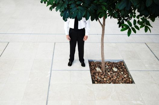Businessman Standing Behind Tree
