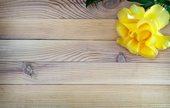 On a light wooden rustic background luxurious yellow rose with delicate petals. Top view, copy space.
