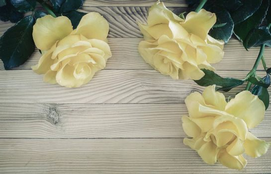 On a light wooden rustic background luxurious yellow roses with delicate petals. Top view, copy space.