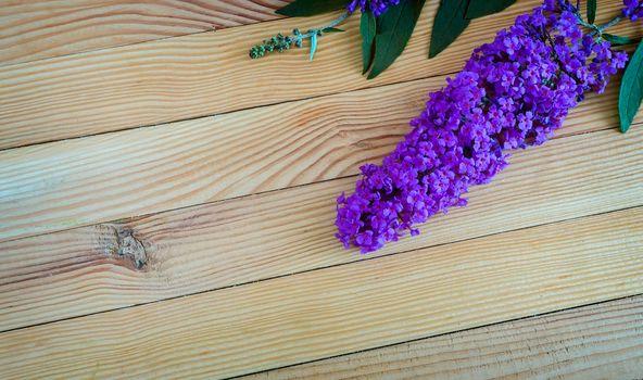 Beautiful inflorescence decorative shrub buddleja Davidii, consisting of many small lilac flowers on a light wooden background.