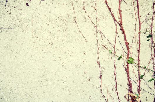 Plants growing up wall background