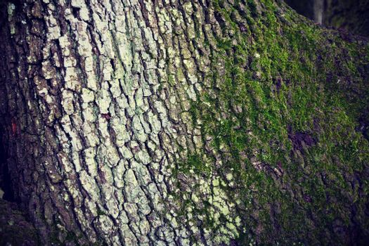 Close up of tree with moss background