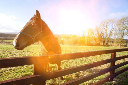 Horse behind fence looking at camera