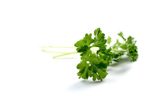 Studio shot of fresh parsley