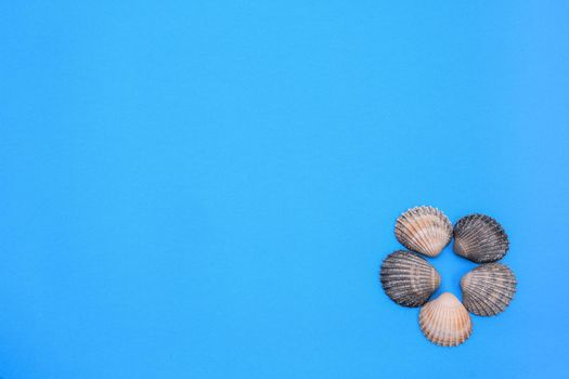 Flat lay. Top view. seashells on a blue background. Seashells and starfish on a pastel background. Vacation concept. copy space