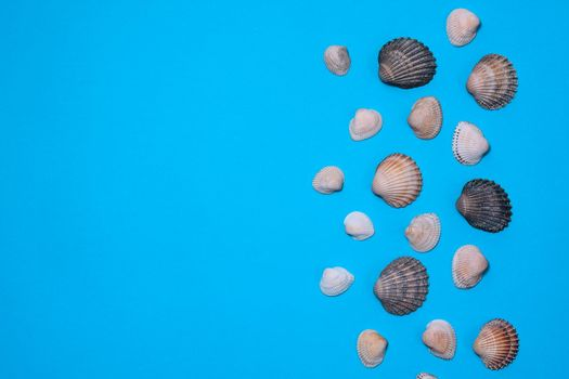 Seashells on a blue paper background. Marine layout. mock up
