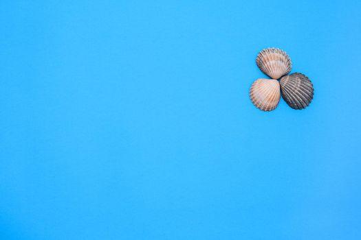 Three seashells on a blue background. marine theme. inscription. Flat lay