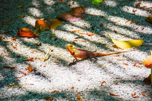 tropical reptile