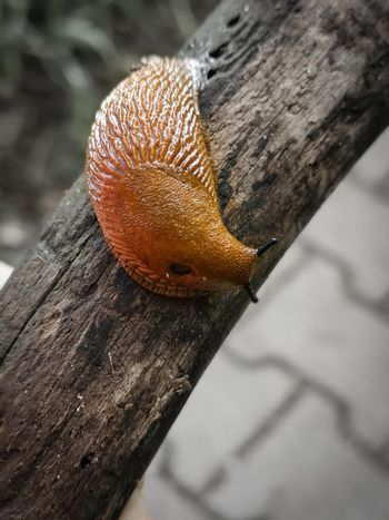 Vertical shot of a snail without a shell crawling on a wooden branch in a field