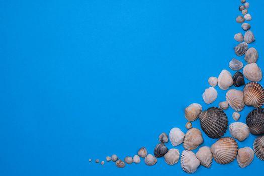 Flat lay seashells on a light blue background. copy space