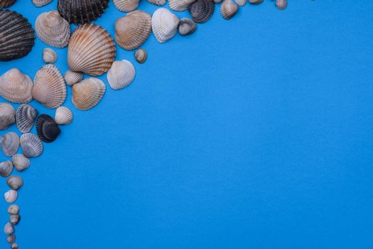 Marine subjects. Seashells on a blue background. summer vacation at the sea. Space for text. Flat lay.
