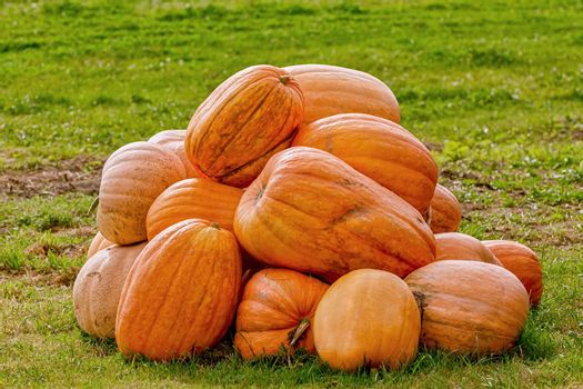 Pumpkins on the lawn