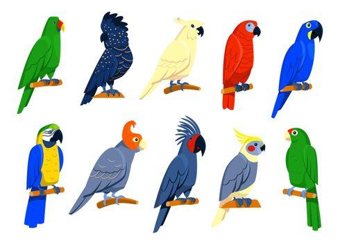Bright tropical parrots set