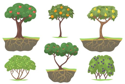 Green fruit trees and berry bushes flat set for web design