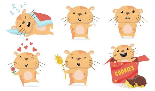 Adorable hamster set