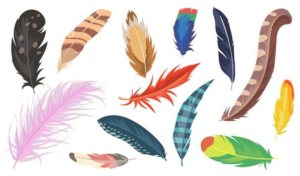 Variety of colorful feathers flat item set