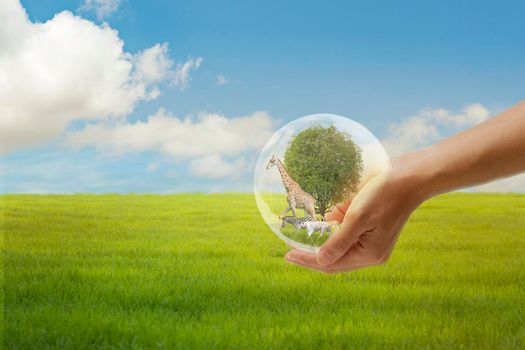 Concept Nature reserve conserve Wildlife reserve , Ecology Human hands protecting the wild and wild animals, trees in crystal globe in the hands nature background