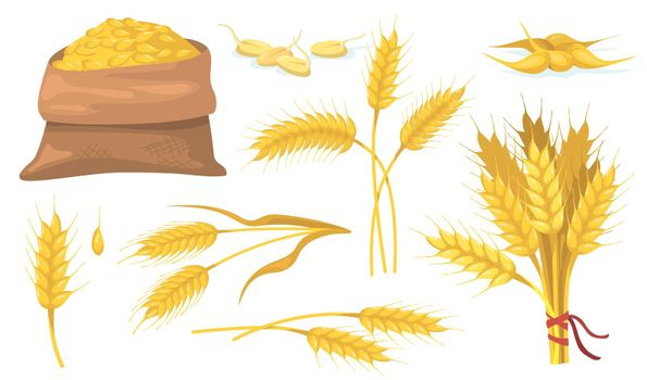 Yellow ripe wheat bunch, spikes and grains flat item set