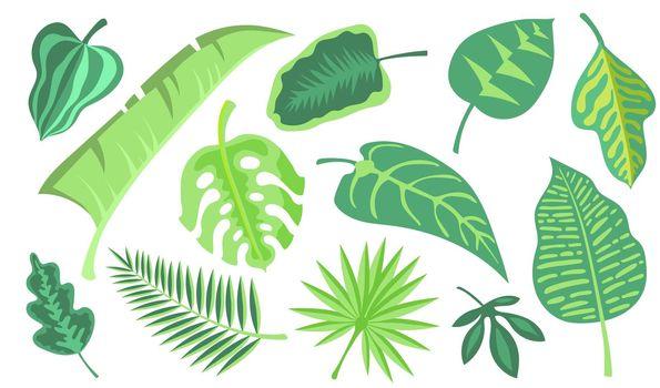 Green exotic foliage flat illustration set