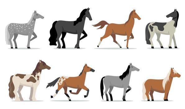 Stud horses set
