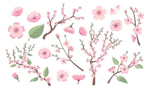 Blooming sakura branches