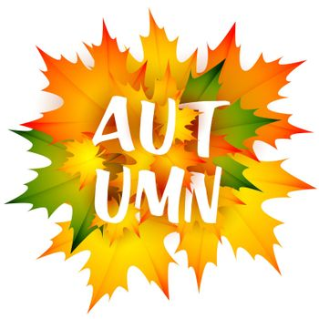 Autumn seasonal leaflet design with bunch of leaves