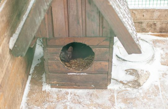 Small black animal European mink in a cage, behind bars. High quality photo