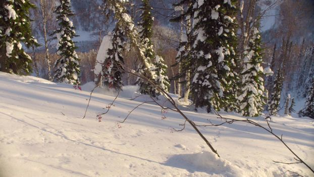 Winter forest in the Siberia