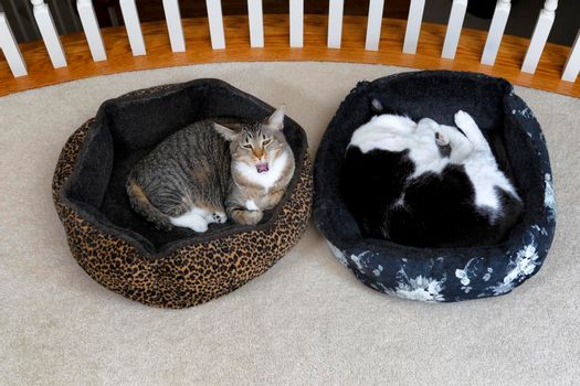 Two house cats preparing to take a nap in their beds