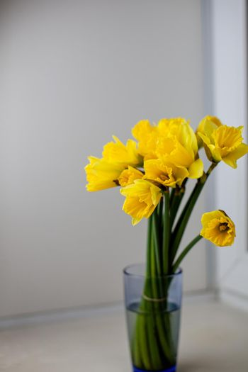 A yellow bouquet of daffodils in a glass vase on the windowsill in the room. A nice gift for your loved one