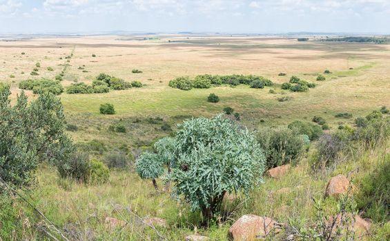 View of a farm near Bloemfontein