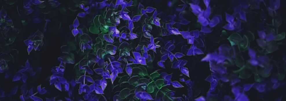 Exotic purple flowers and leaves at night as nature background