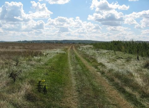 nature of central Ukraine in summer. Fields and woodland.