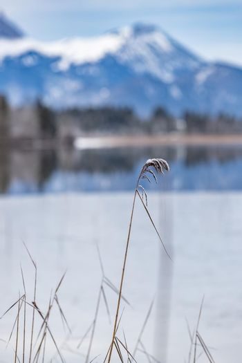 Landscape of a specular reflection in the lake, a dry grass, a cane and snags in the foreground, mountains and the forest on a background, ice on water, grass is covered with hoarfrost, tranquillity