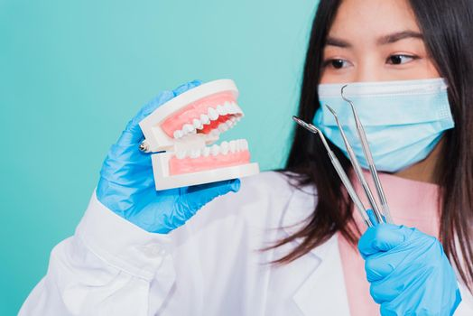 woman dentist holding professional tool and model teeth denture
