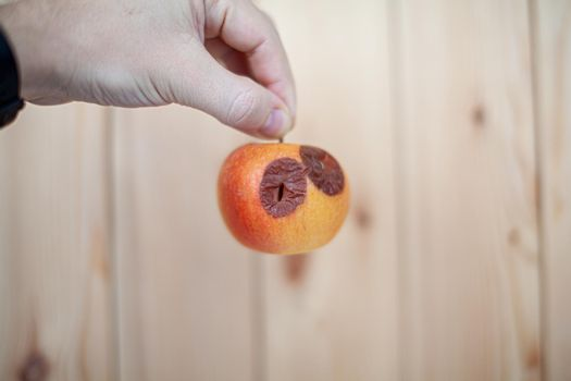 Close-up of a human hand holding a slightly degraded apple, isolated on a white background with a copy space. Biofruits tend to rot faster than bio-modified ones. The concept of healthy organic food.